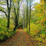 4 raisons de pratiquer le bain de forêt